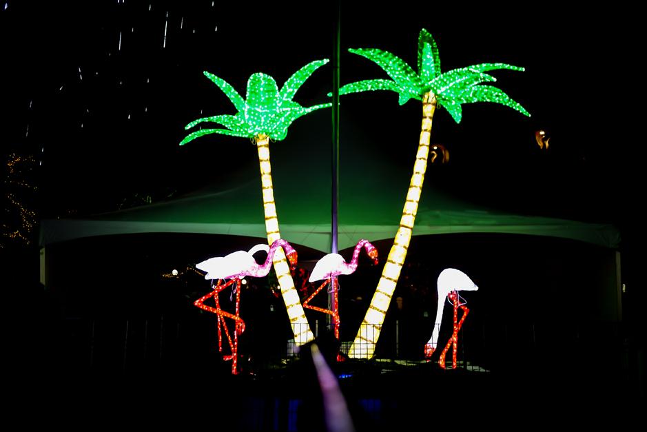 brew lights palm trees